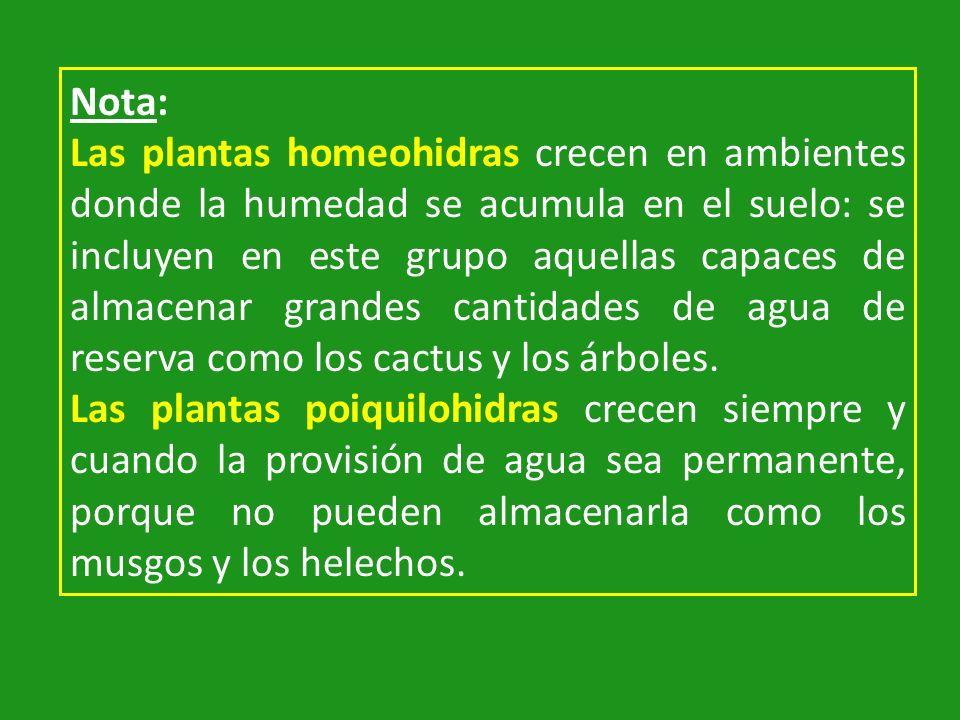 Nota: Las plantas homeohidras crecen en ambientes donde la humedad se acumula en el suelo: se incluyen en este grupo aquellas capaces de almacenar gra