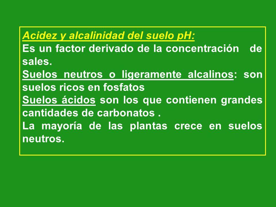 Acidez y alcalinidad del suelo pH: Es un factor derivado de la concentración de sales. Suelos neutros o ligeramente alcalinos: son suelos ricos en fos