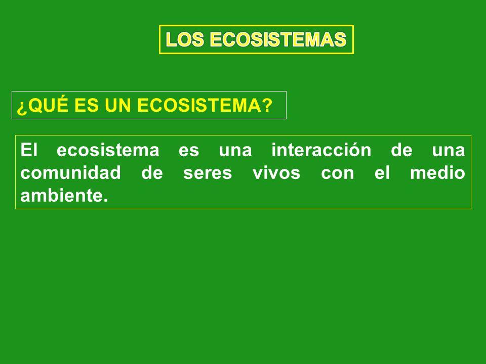 ¿QUÉ ES UN ECOSISTEMA? El ecosistema es una interacción de una comunidad de seres vivos con el medio ambiente.