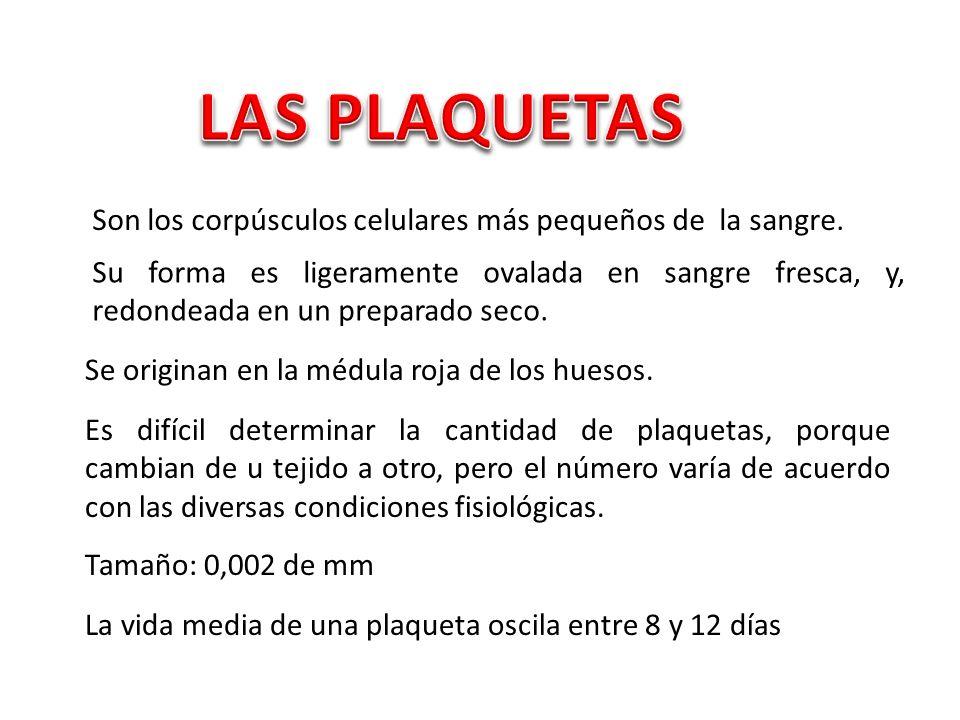 Intervienen en el proceso de coagulación de la sangre, liberando el fermento denominado tromboquinasa.
