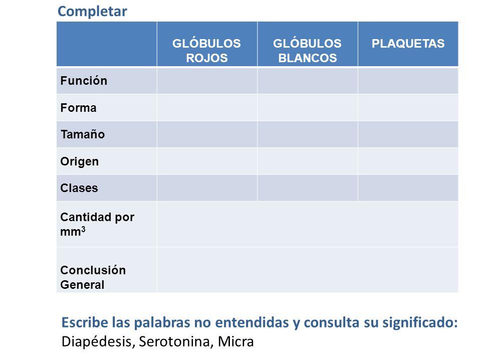 CLASES DE GLÓBULOS BLANCOS Granulocitos Agranulocitos Neutrófilos 70% Eosinófilos 3% Basófilos 0,5% Linfocitos 3% Monocitos 5%