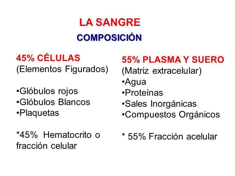 El plasma representa la matriz extracelular liquida en la que está suspendido los elementos formes.