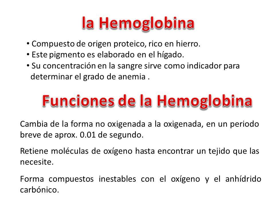 Recoger el oxígeno a nivel de los pulmones, convirtiendo la hemoglobina en oxihemoglobina.
