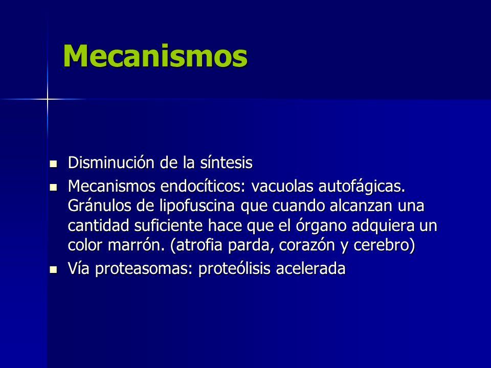 Mecanismos Disminución de la síntesis Disminución de la síntesis Mecanismos endocíticos: vacuolas autofágicas. Gránulos de lipofuscina que cuando alca