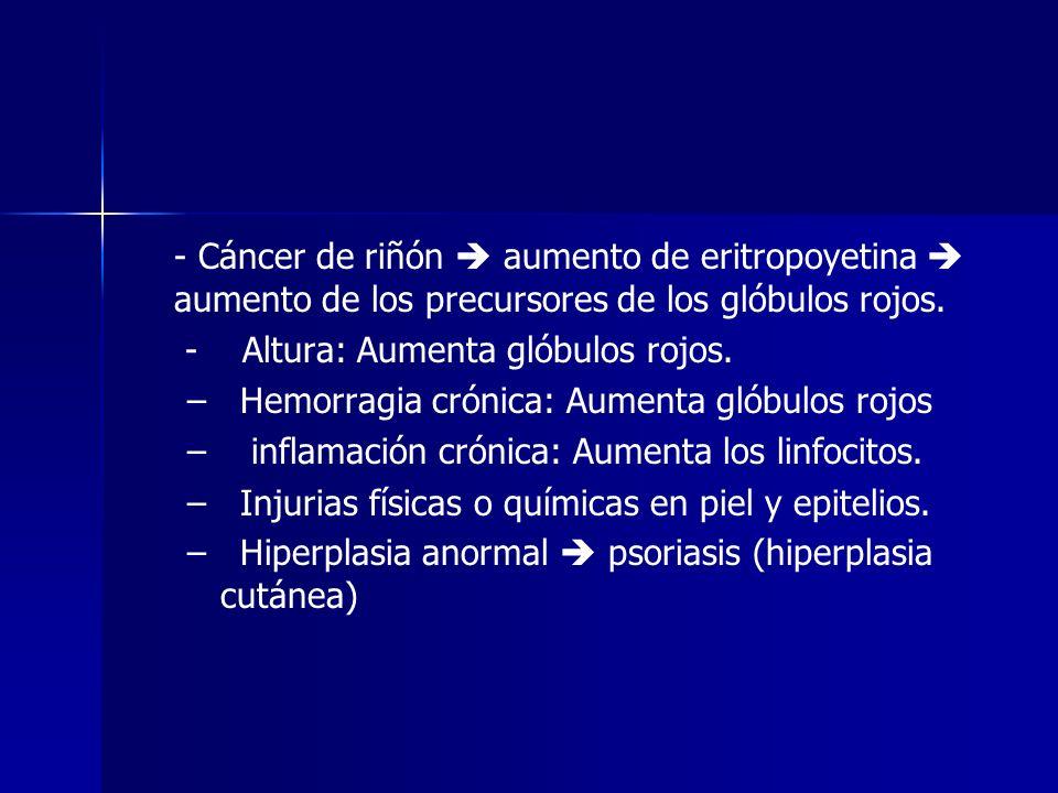 - Cáncer de riñón aumento de eritropoyetina aumento de los precursores de los glóbulos rojos. - Altura: Aumenta glóbulos rojos. – – Hemorragia crónica