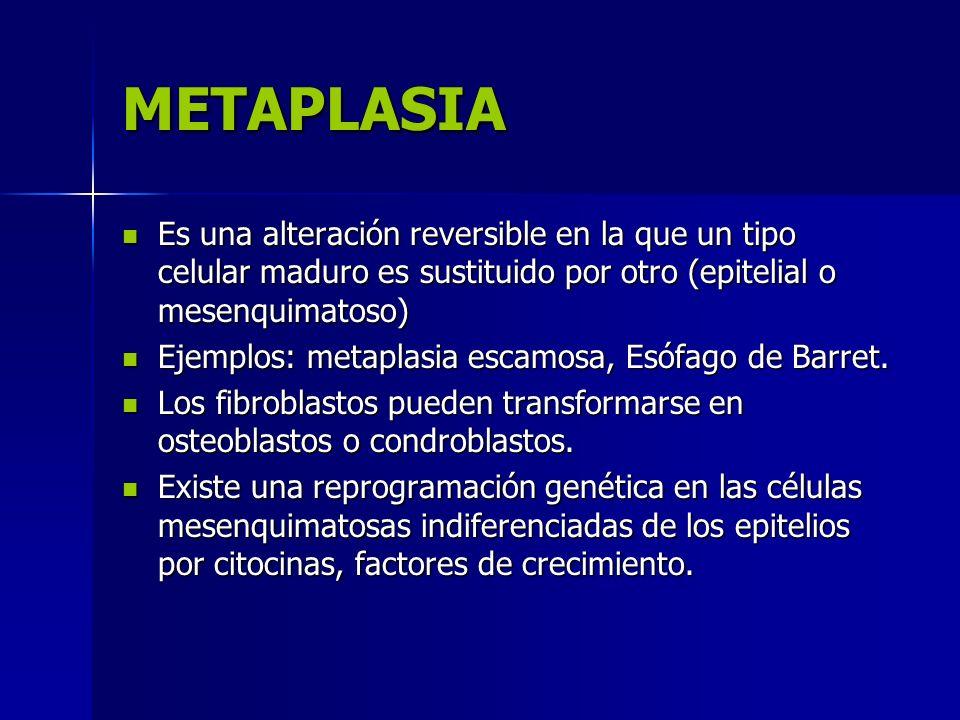 METAPLASIA Es una alteración reversible en la que un tipo celular maduro es sustituido por otro (epitelial o mesenquimatoso) Es una alteración reversi
