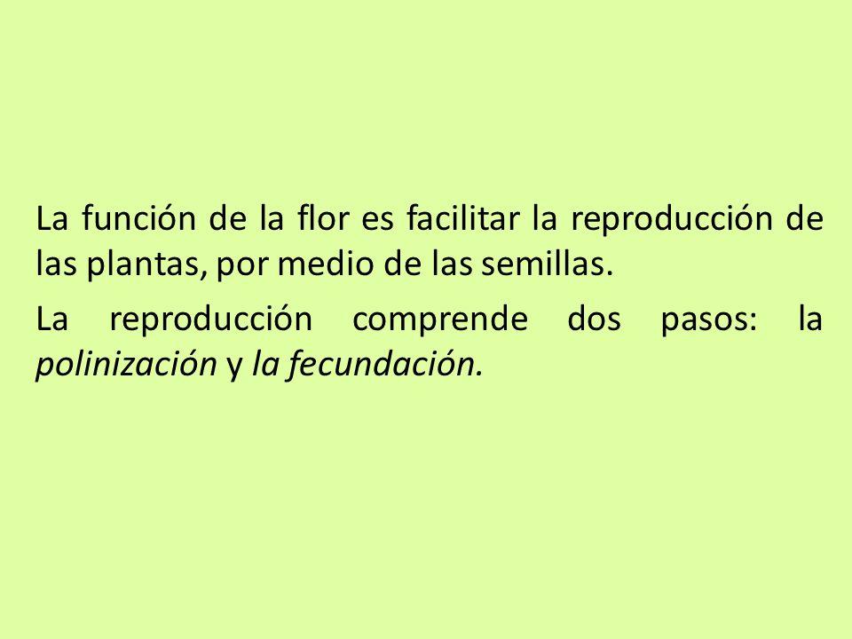 La función de la flor es facilitar la reproducción de las plantas, por medio de las semillas. La reproducción comprende dos pasos: la polinización y l