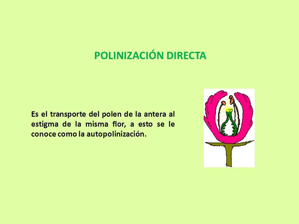 Es el transporte del polen de la antera al estigma de la misma flor, a esto se le conoce como la autopolinización. POLINIZACIÓN DIRECTA