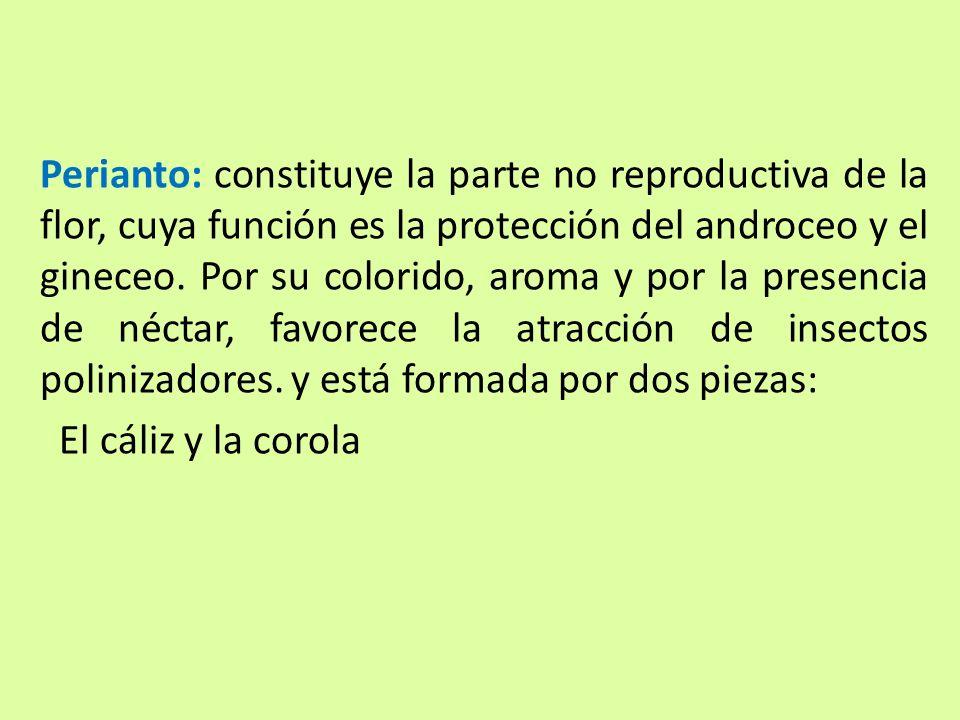 Perianto: constituye la parte no reproductiva de la flor, cuya función es la protección del androceo y el gineceo. Por su colorido, aroma y por la pre