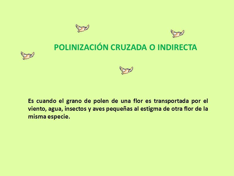 Polinización Entomófila: El agente que transporta el polen son insectos.