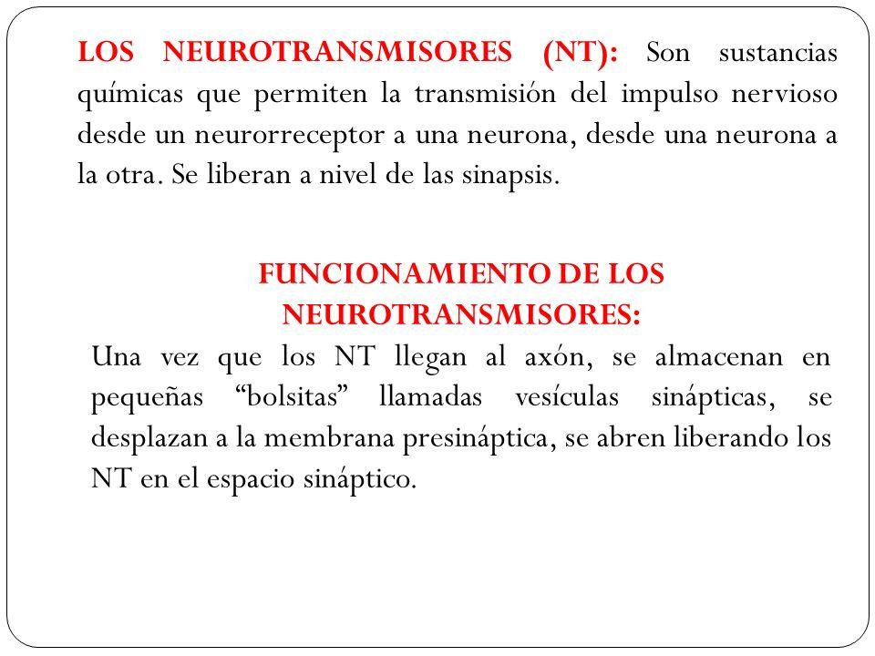 LOS NEUROTRANSMISORES (NT): Son sustancias químicas que permiten la transmisión del impulso nervioso desde un neurorreceptor a una neurona, desde una