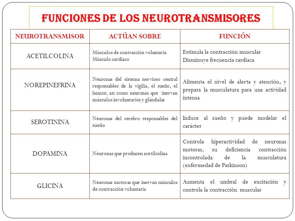 FUNCIONES DE LOS NEUROTRANSMISORES NEUROTRANSMISORACTÚAN SOBREFUNCIÓN ACETILCOLINA GLICINA DOPAMINA SEROTININA NOREPINEFRINA (noradrenalina) Músculos