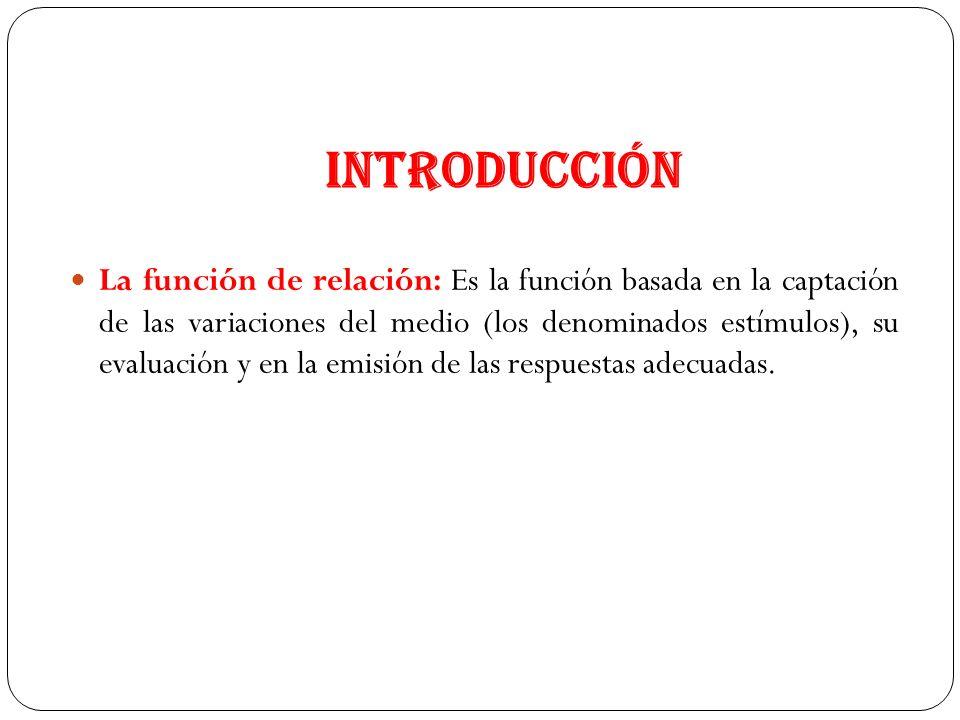 INTRODUCCIÓN La función de relación: Es la función basada en la captación de las variaciones del medio (los denominados estímulos), su evaluación y en
