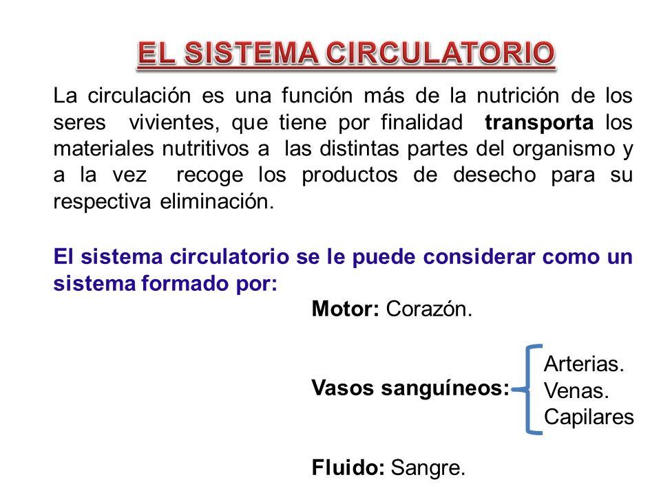 La circulación es una función más de la nutrición de los seres vivientes, que tiene por finalidad transporta los materiales nutritivos a las distintas