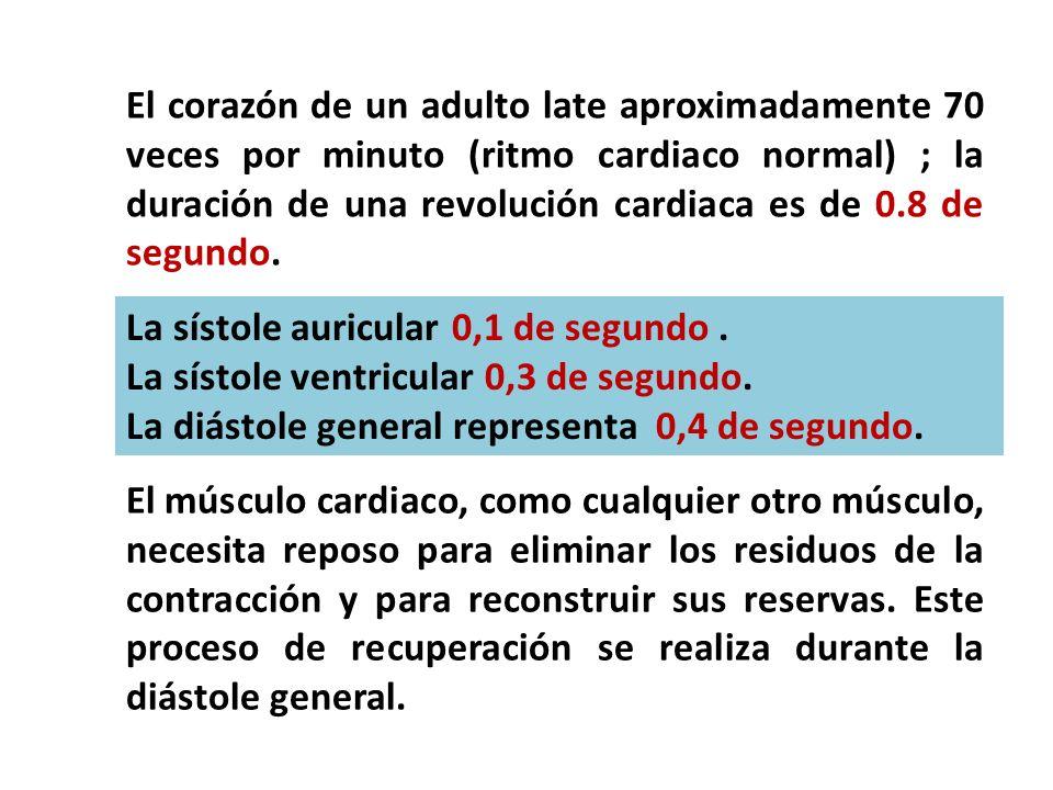 El corazón de un adulto late aproximadamente 70 veces por minuto (ritmo cardiaco normal) ; la duración de una revolución cardiaca es de 0.8 de segundo
