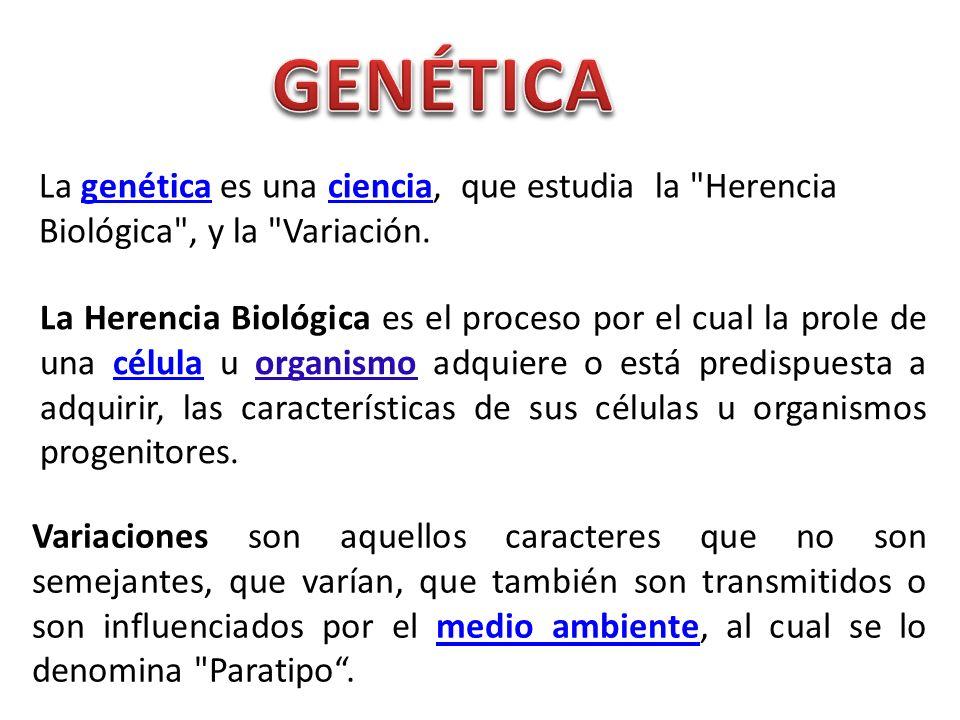 La genética es una ciencia, que estudia la
