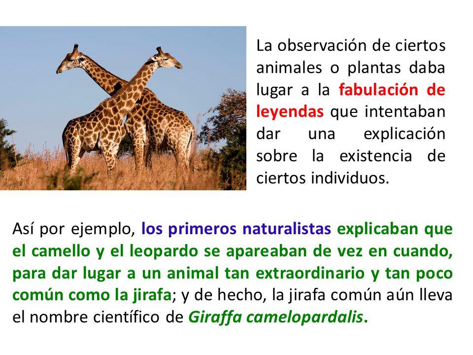 La observación de ciertos animales o plantas daba lugar a la fabulación de leyendas que intentaban dar una explicación sobre la existencia de ciertos