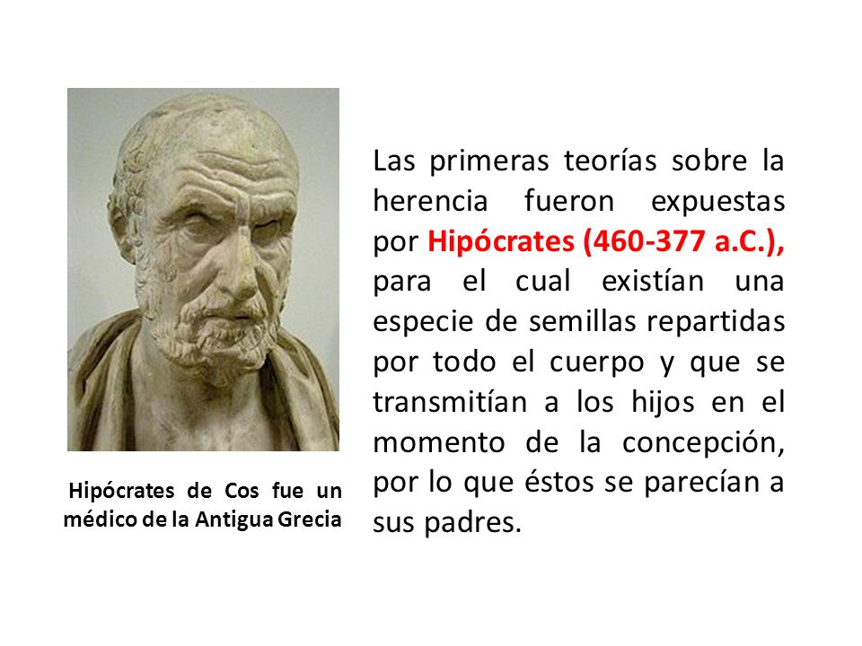 Las primeras teorías sobre la herencia fueron expuestas por Hipócrates (460-377 a.C.), para el cual existían una especie de semillas repartidas por to