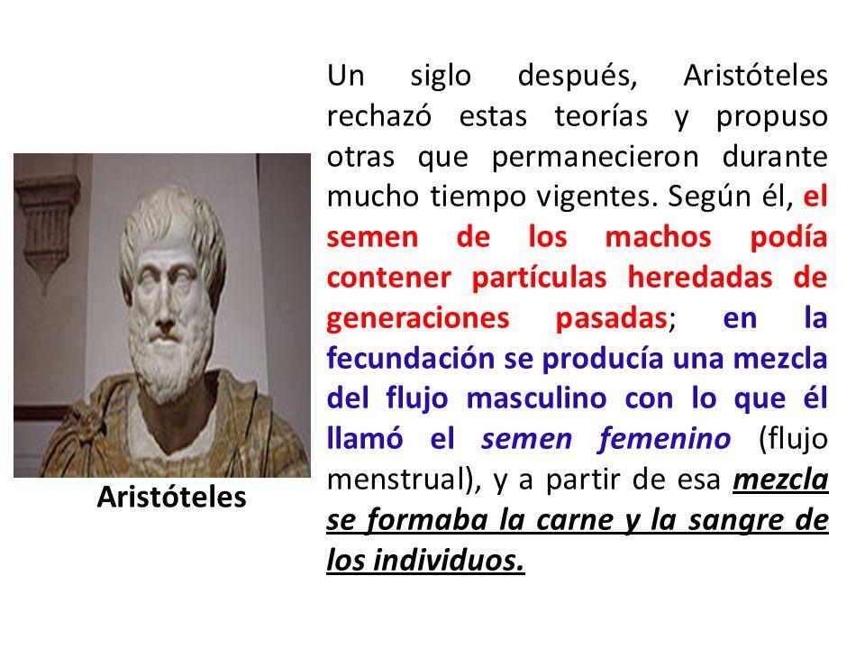 Un siglo después, Aristóteles rechazó estas teorías y propuso otras que permanecieron durante mucho tiempo vigentes. Según él, el semen de los machos