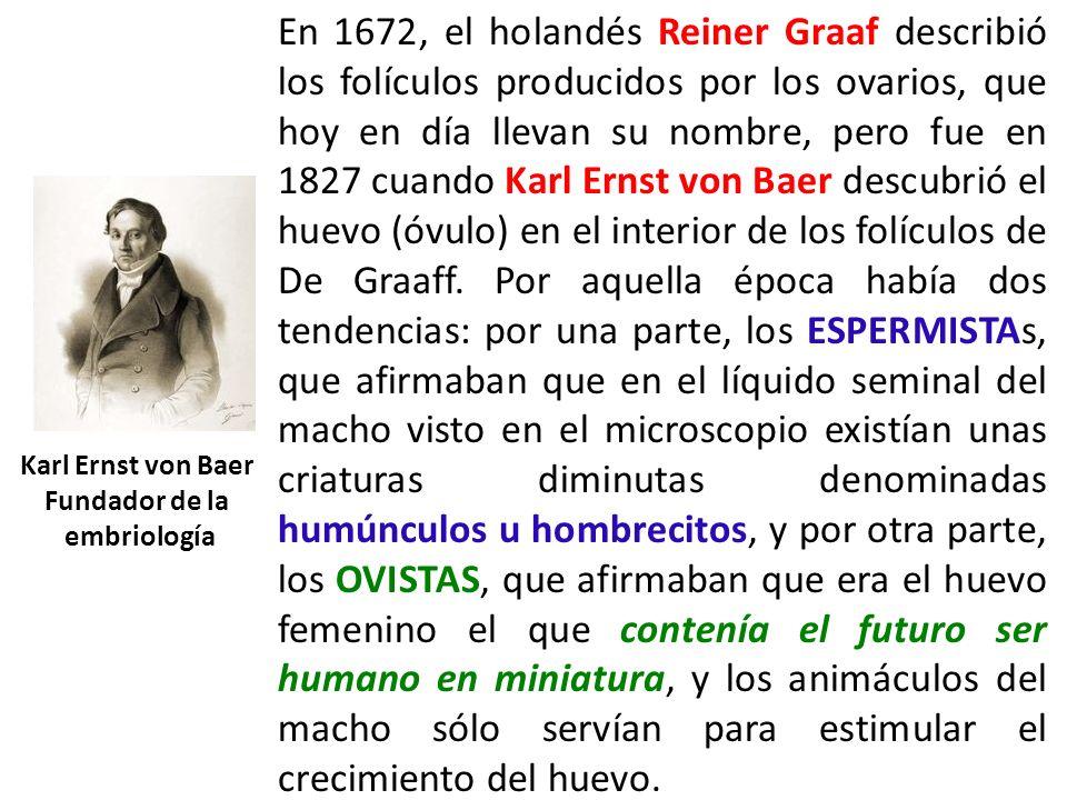 En 1672, el holandés Reiner Graaf describió los folículos producidos por los ovarios, que hoy en día llevan su nombre, pero fue en 1827 cuando Karl Er