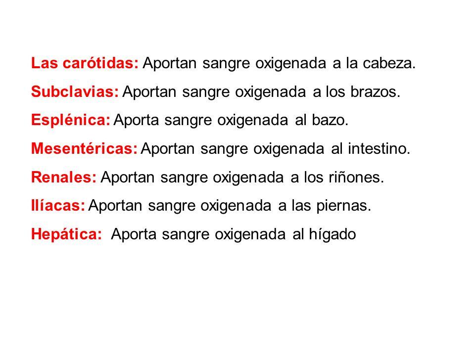 Las carótidas: Aportan sangre oxigenada a la cabeza. Subclavias: Aportan sangre oxigenada a los brazos. Esplénica: Aporta sangre oxigenada al bazo. Me