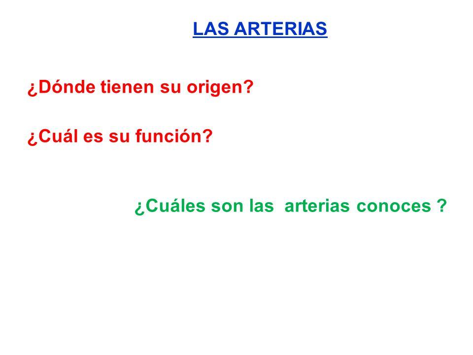 LAS ARTERIAS ¿Dónde tienen su origen? ¿Cuál es su función? ¿Cuáles son las arterias conoces ?