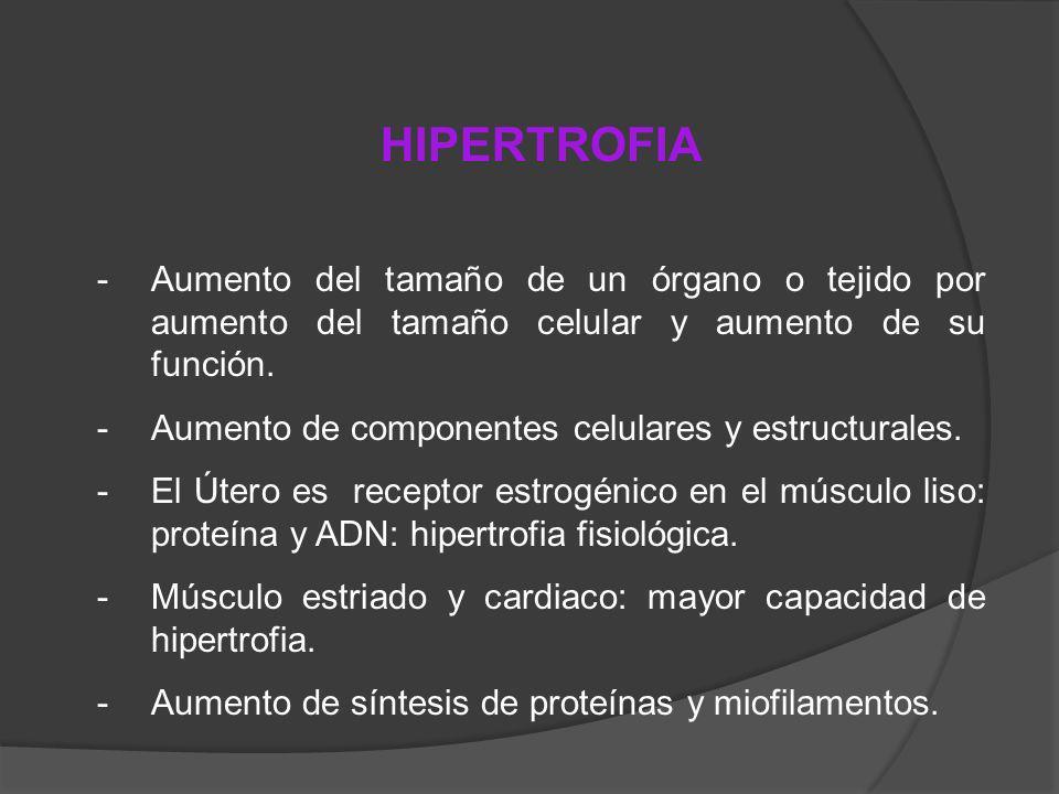 -Aumento del tamaño de un órgano o tejido por aumento del tamaño celular y aumento de su función. -Aumento de componentes celulares y estructurales. -