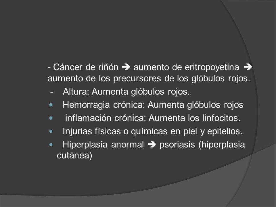 - Cáncer de riñón aumento de eritropoyetina aumento de los precursores de los glóbulos rojos. - Altura: Aumenta glóbulos rojos. Hemorragia crónica: Au