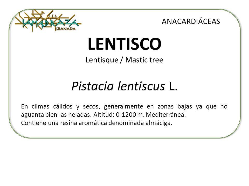 LENTISCO Lentisque / Mastic tree Pistacia lentiscus L. ANACARDIÁCEAS En climas cálidos y secos, generalmente en zonas bajas ya que no aguanta bien las