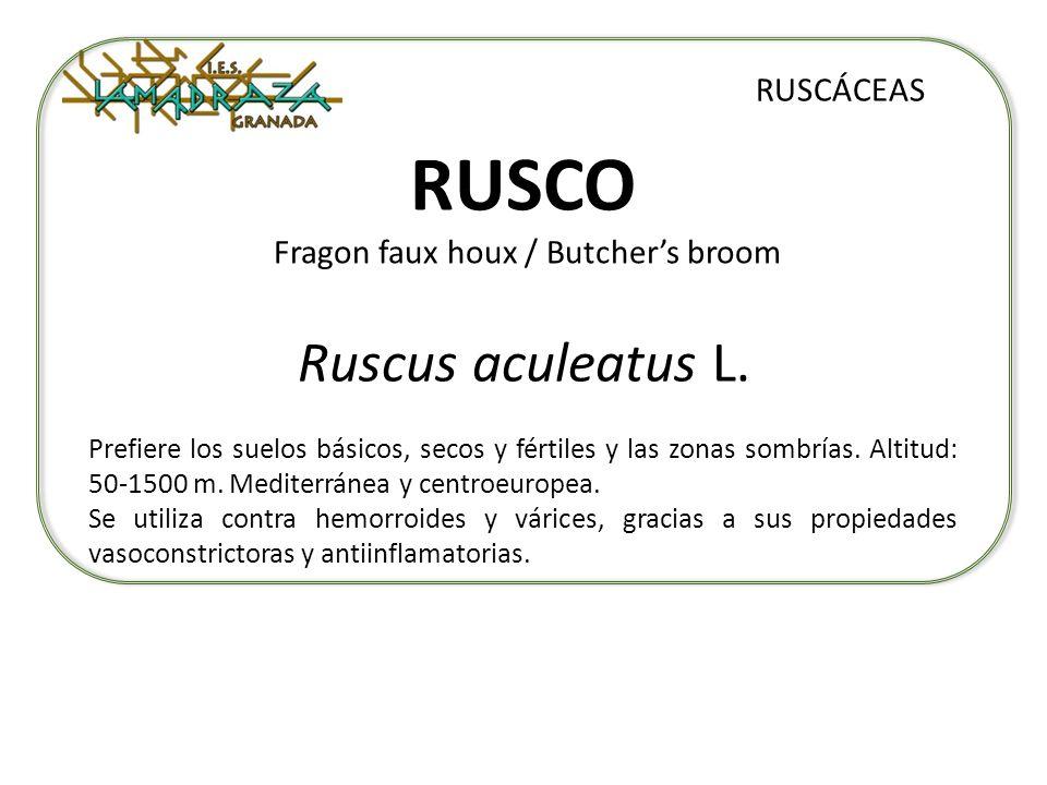 RUSCO Fragon faux houx / Butchers broom Ruscus aculeatus L. RUSCÁCEAS Prefiere los suelos básicos, secos y fértiles y las zonas sombrías. Altitud: 50-