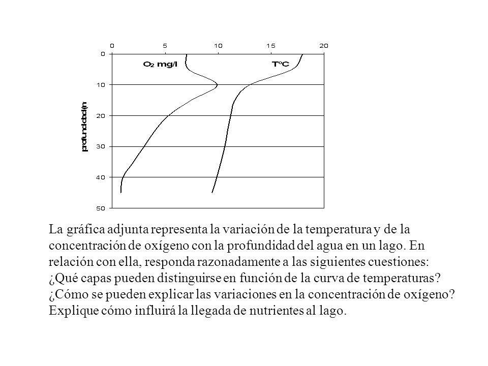 La gráfica adjunta representa la variación de la temperatura y de la concentración de oxígeno con la profundidad del agua en un lago. En relación con