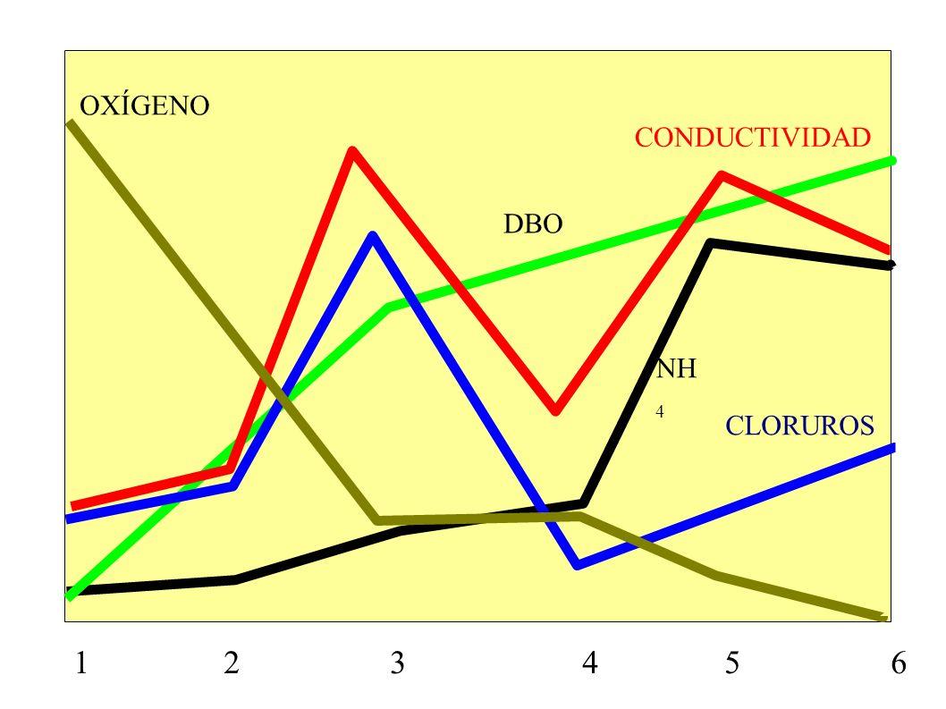 1 2 3 4 5 6 CONDUCTIVIDAD CLORUROS OXÍGENO NH 4