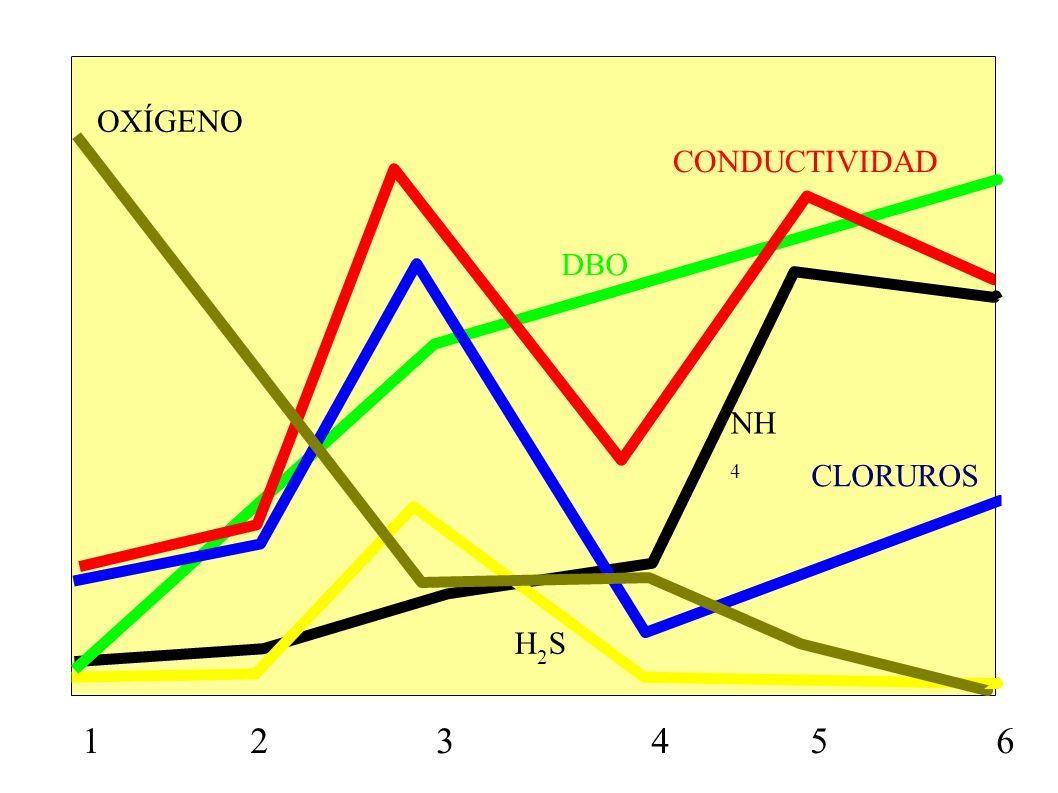 1 2 3 4 5 6 CONDUCTIVIDAD CLORUROS OXÍGENO DBO NH 4