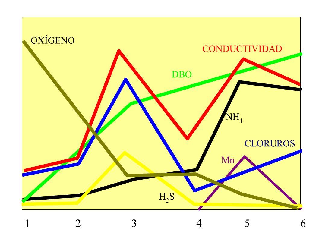 1 2 3 4 5 6 CONDUCTIVIDAD CLORUROS OXÍGENO DBO H2SH2S NH 4