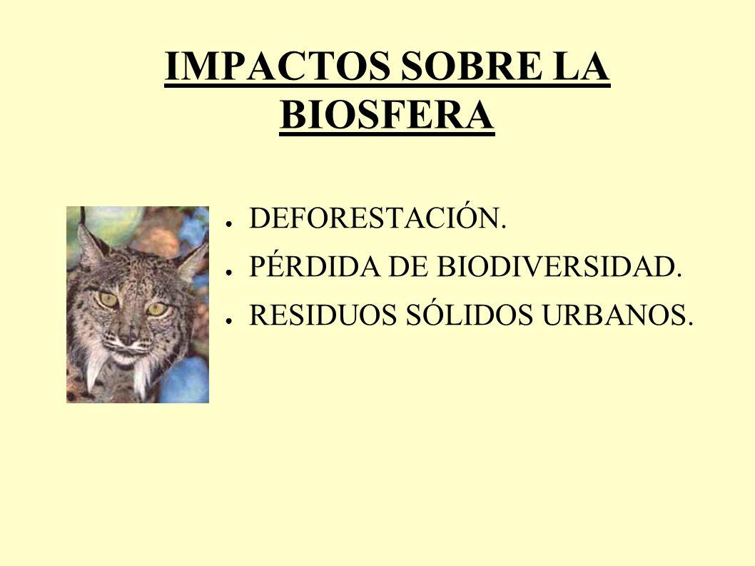 Económicas.Ecológicas: – Desaparición de especies vegetales y animales.