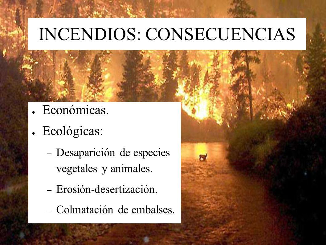 DEFORESTACIÓN: CAUSAS Demanda de madera (2/3) y papel (1/3). Talas a matarrasa, sin reforestación. Técnicas forestales inadecuadas. – Repoblación con