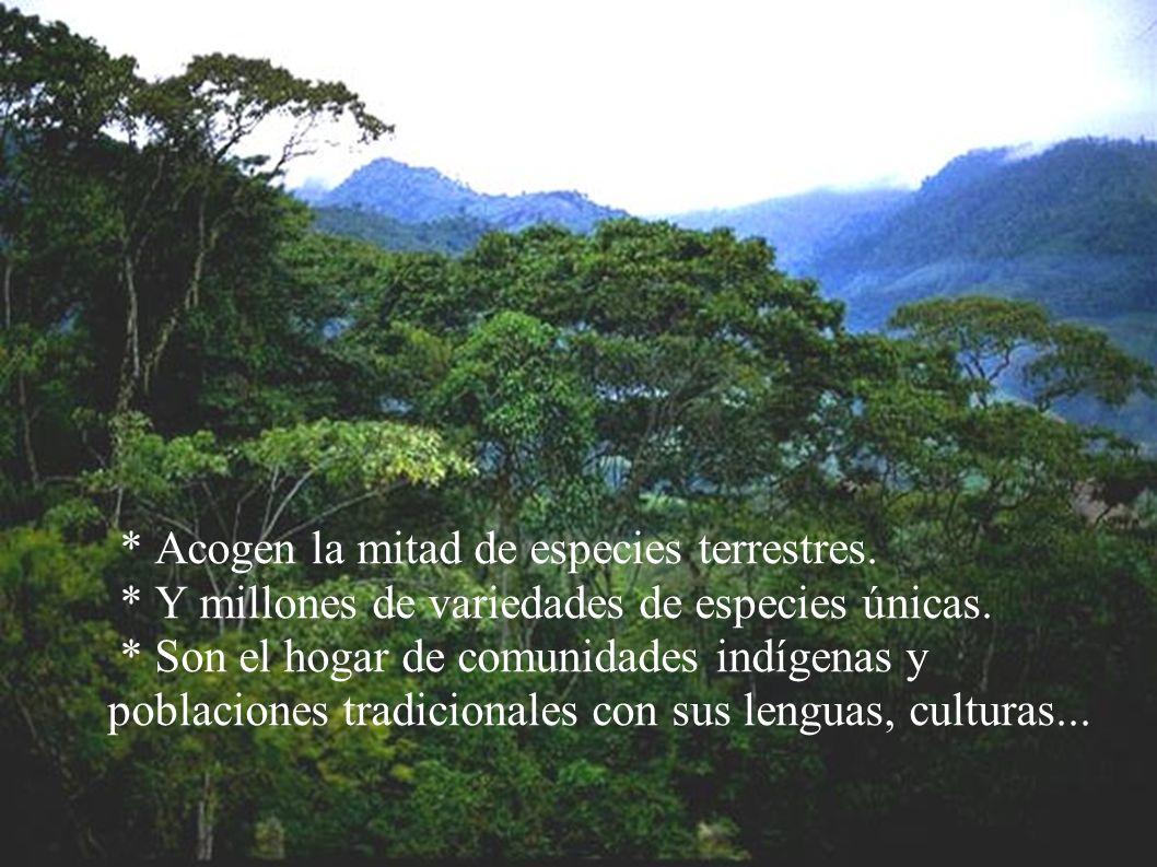 BOSQUES PRIMARIOS Grandes extensiones de bosque, testigos de lo que fueron los bosques originales del planeta y que no han sido transformadas o altera