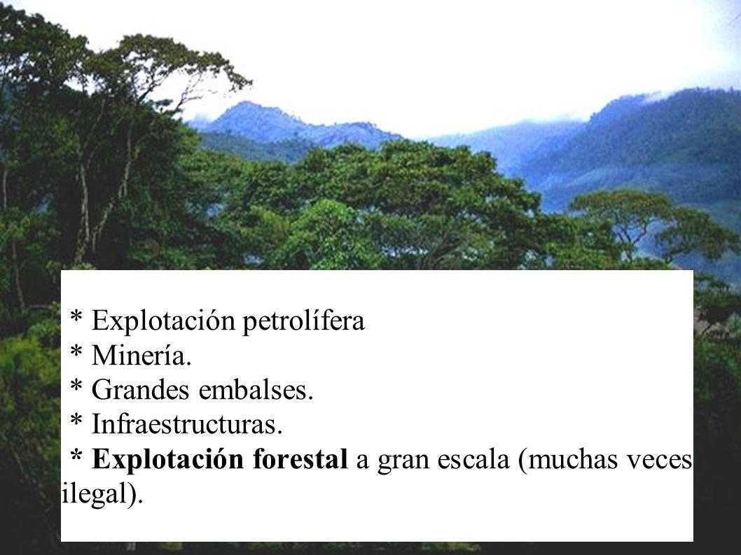 * Acogen la mitad de especies terrestres. * Y millones de variedades de especies únicas. * Son el hogar de comunidades indígenas y poblaciones tradici