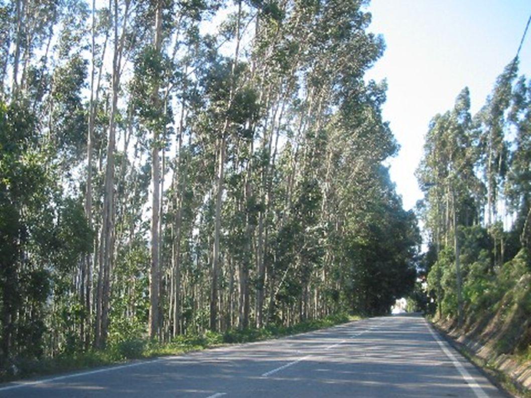 BOSQUES PRIMARIOS Grandes extensiones de bosque, testigos de lo que fueron los bosques originales del planeta y que no han sido transformadas o alteradas por la actividad humana industrial.