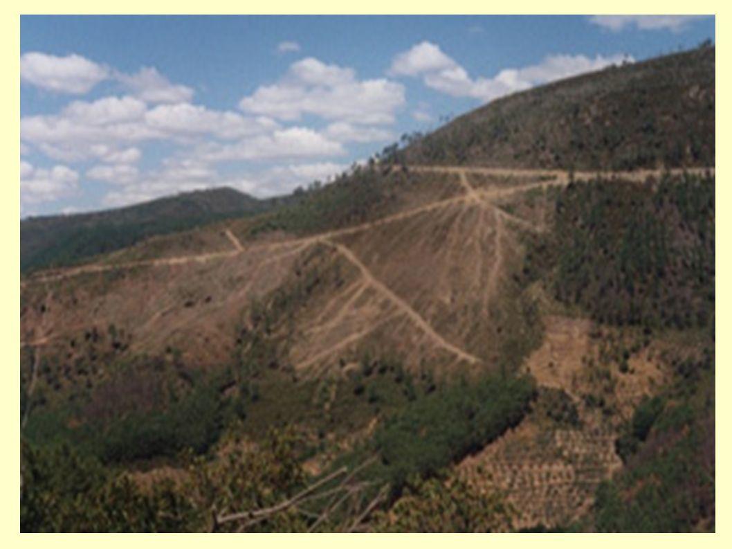 * En España no quedan bosques primarios.