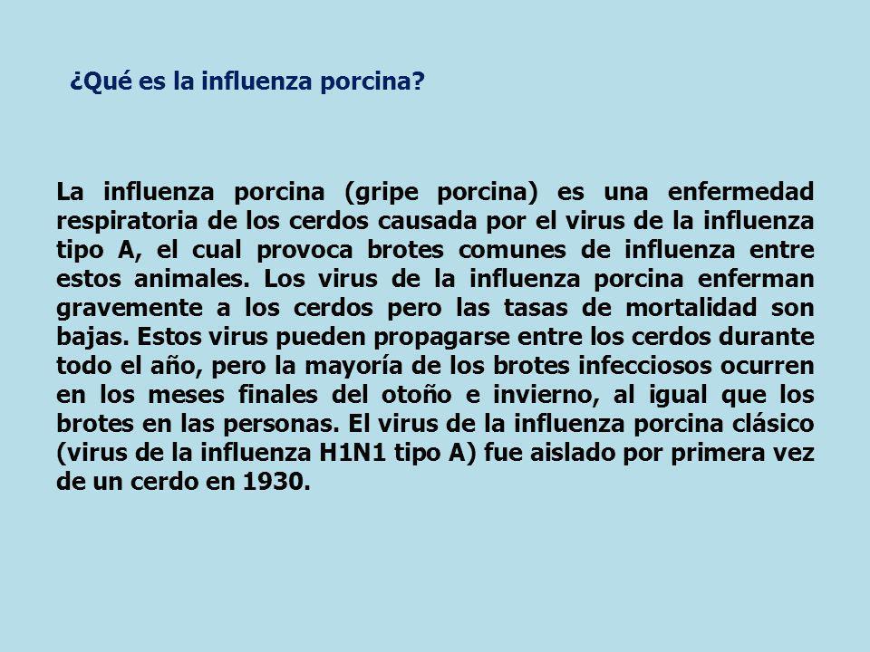 La influenza porcina (gripe porcina) es una enfermedad respiratoria de los cerdos causada por el virus de la influenza tipo A, el cual provoca brotes