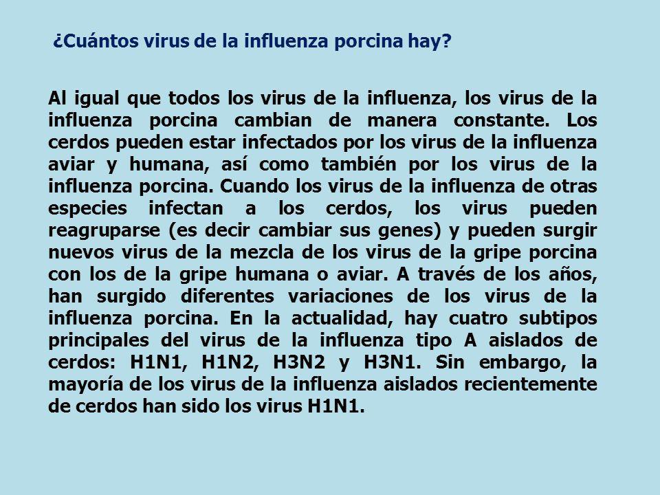 Al igual que todos los virus de la influenza, los virus de la influenza porcina cambian de manera constante. Los cerdos pueden estar infectados por lo