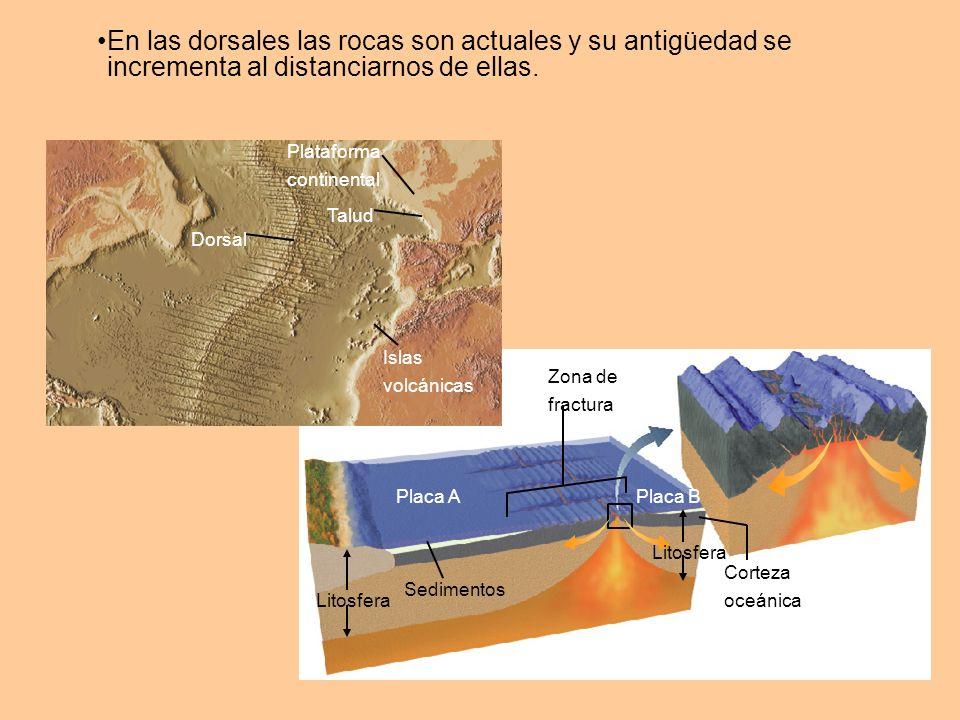 Subducción Falla transformante Dorsal oceánica Los límites de placas