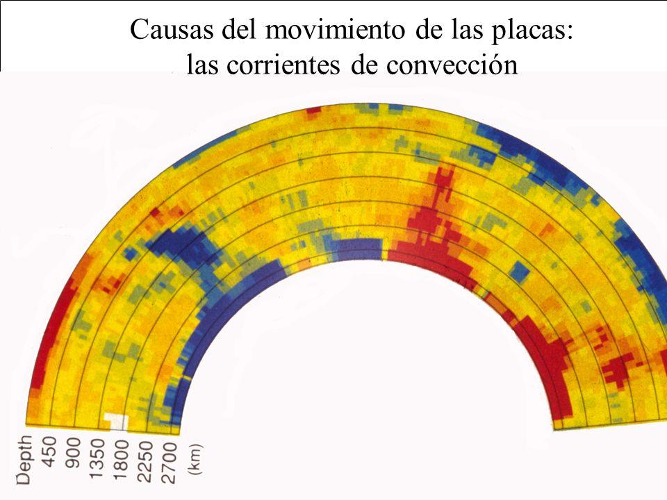 TIPO DE MARGEN DIVERGENTECONVERGENTETRANSFORMANTE MOVIMIENTO EXTENSIÓNSUBDUCCIÓN DESPLAZAMIENTO LATERAL EFECTO CONSTRUCTIVO (se crea litosfera) DESTRUCTIVO (se destruye litosfera) CONSERVATIVO (ni se destruye ni se crea litosfera) TOPOGRAFÍA DORSAL / RIFT FOSA y/o CORDILLERAS DE PLEGAMIENTO POCO DESTACABLE VULCANISMO SÍ (basaltos)SÍ (andesitas)NO SISMICIDAD SÍ (de foco somero) SÍ (de foco somero, intermedio y profundo) SÍ (de foco somero)