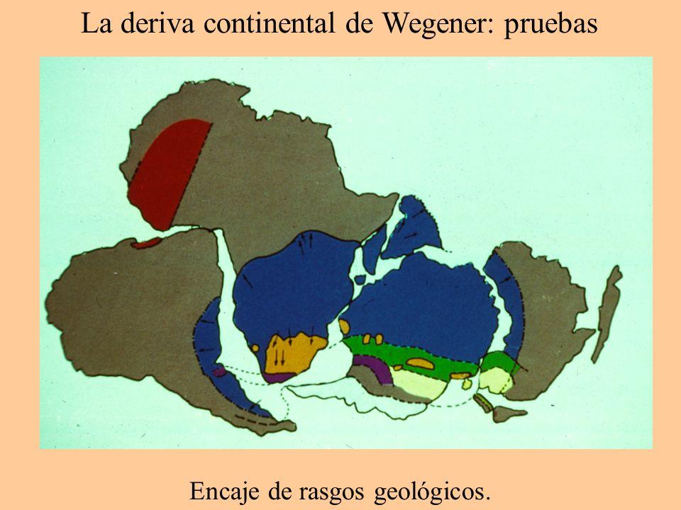 La deriva continental de Wegener: pruebas Continente Plataforma continental Solapamiento Huellas Encaje de costas.