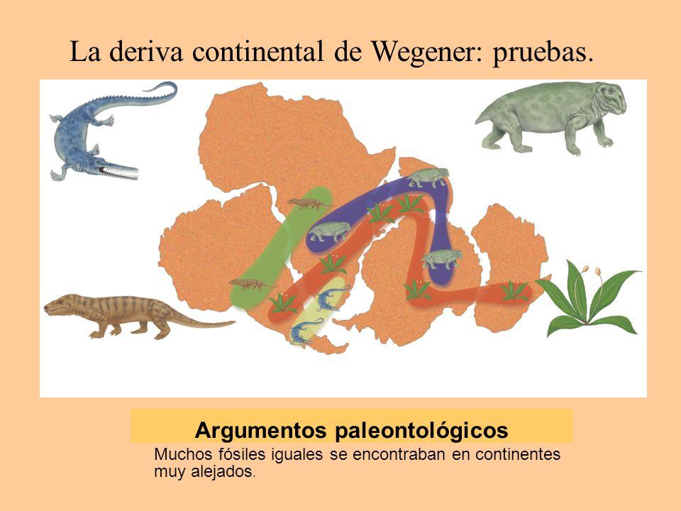 Argumentos paleontológicos Muchos fósiles iguales se encontraban en continentes muy alejados.