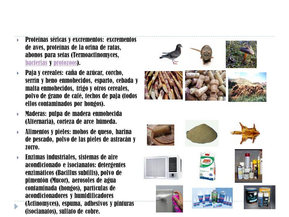 Proteínas séricas y excrementos: excrementos de aves, proteínas de la orina de ratas, abonos para setas (Termoactinomyces, bacterias y protozoos). bac