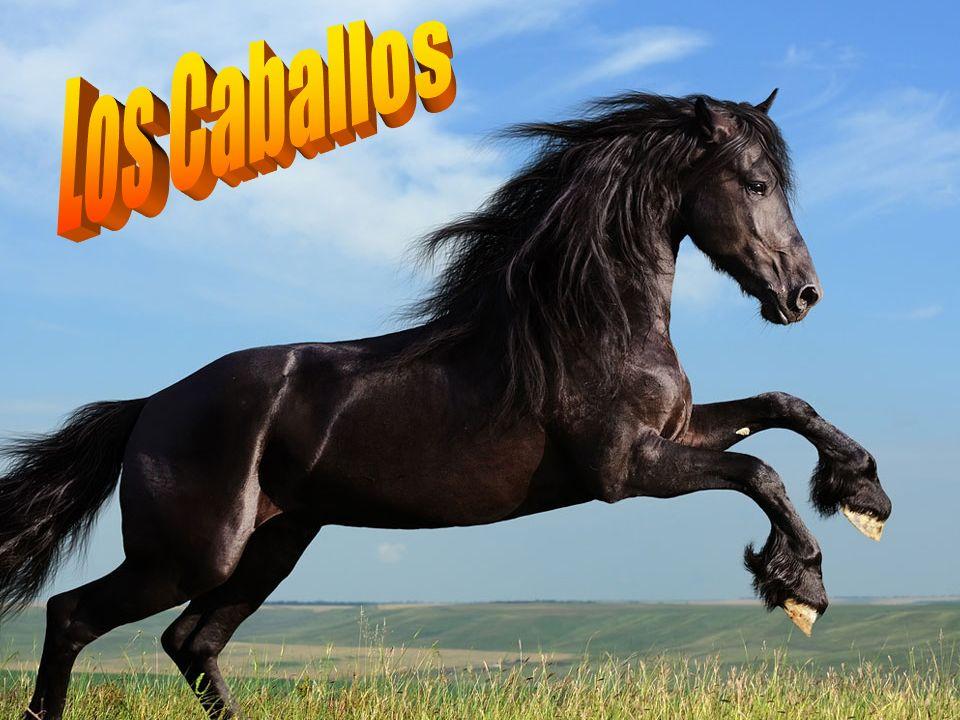 Historia del caballo Eohippus: vivió hace 55millones de años.