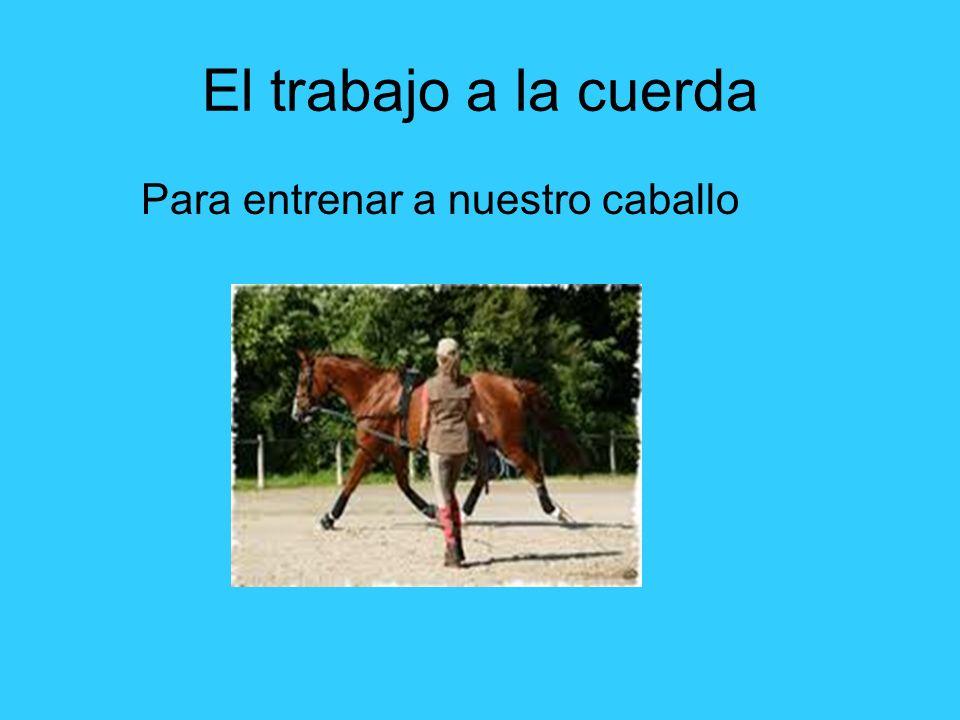 El trabajo a la cuerda Para entrenar a nuestro caballo