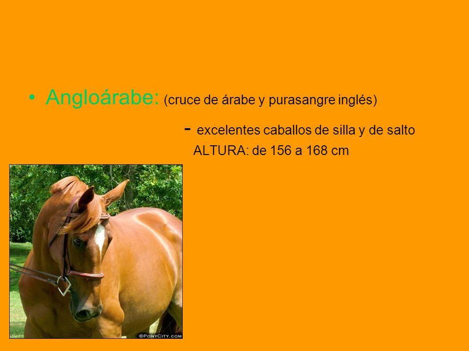 PLANTAS NOCIVAS En la naturaleza hay plantas que suponen peligro para los caballo y ponis.